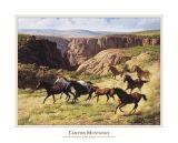 Canyon Mustangs art print by John Leone