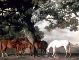 Green Pastures art print by George Stubbs